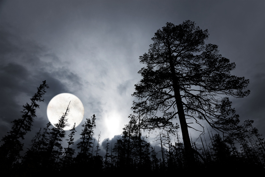 spooky forest with silhouettes of trees