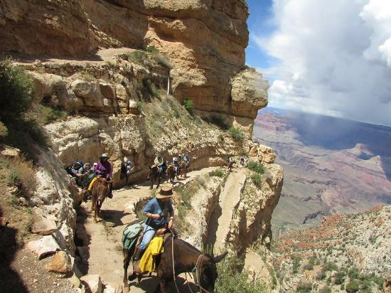 Surefooted, dilligent mules make the trip into the Grand Canyon possible.