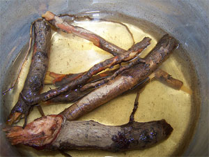 Sassafrass Roots