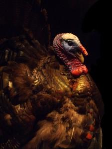 Me as a Chicken. Pretty wonderful, isn't it?